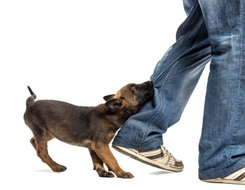 Dog Bite Injury Compensation Claims Require Expert Personal Injury Solicitors UK